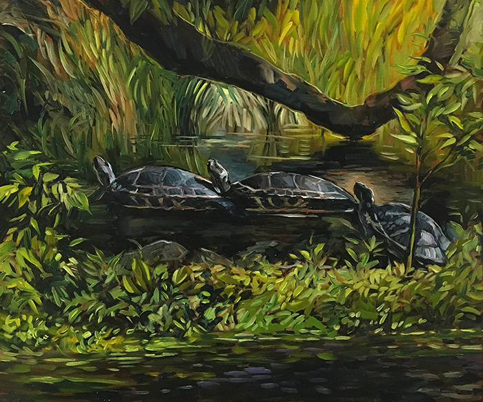 "Three Turtles on the Ichetucknee River (oil) 20""x24"" $800"